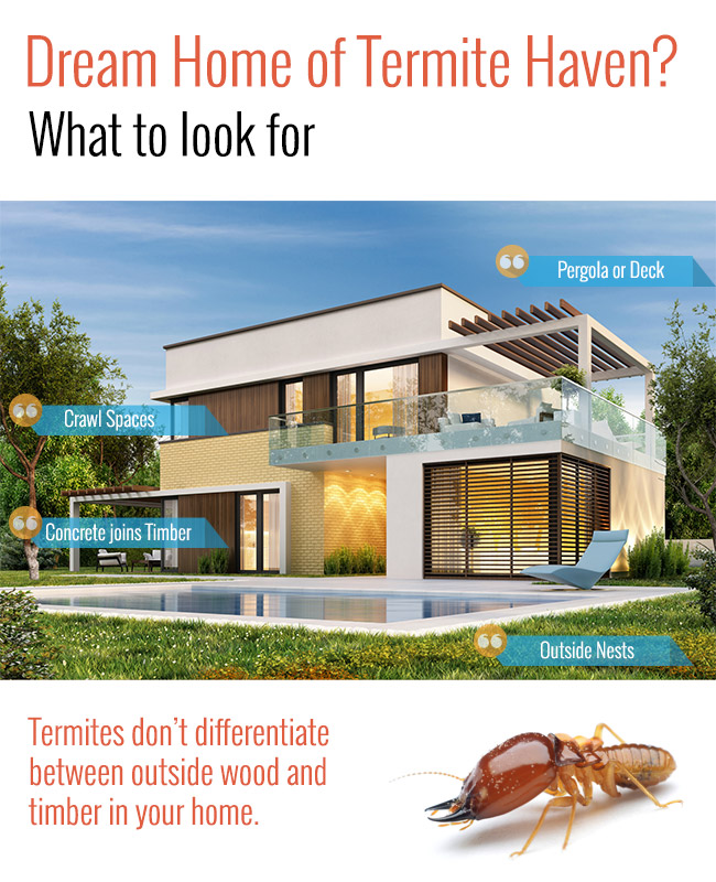 What Termites Look For